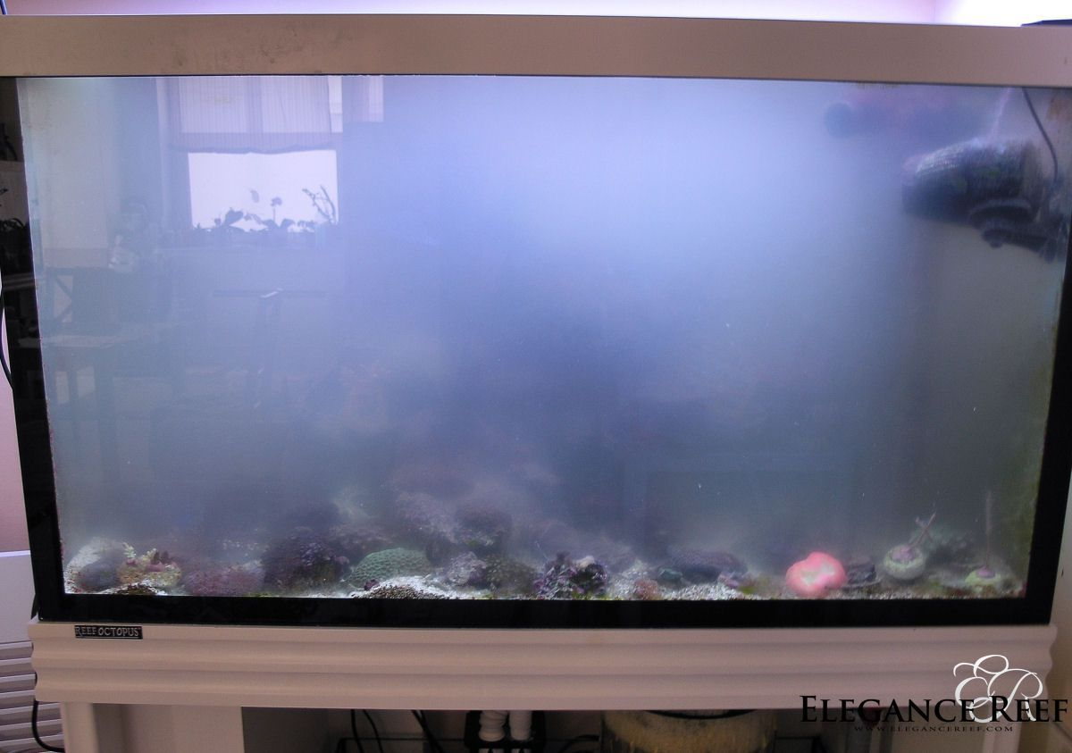 Cyanobacteria and green hair algae living reefs for Bacterial bloom fish tank