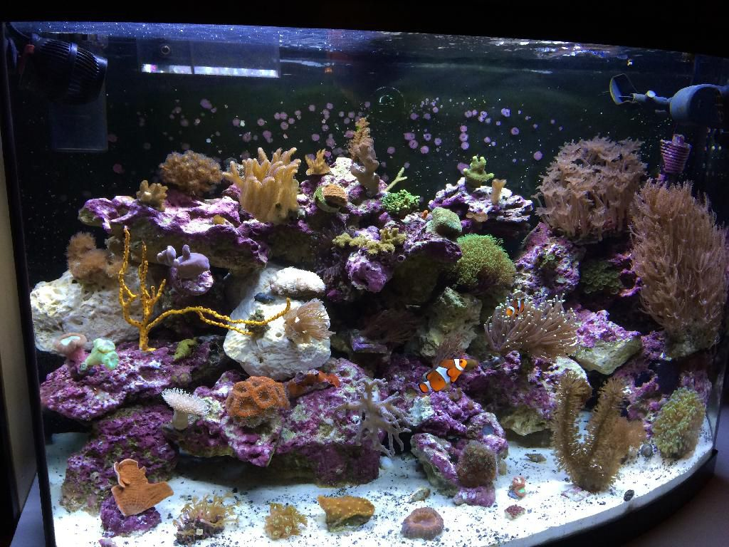 Aquarian.jpg
