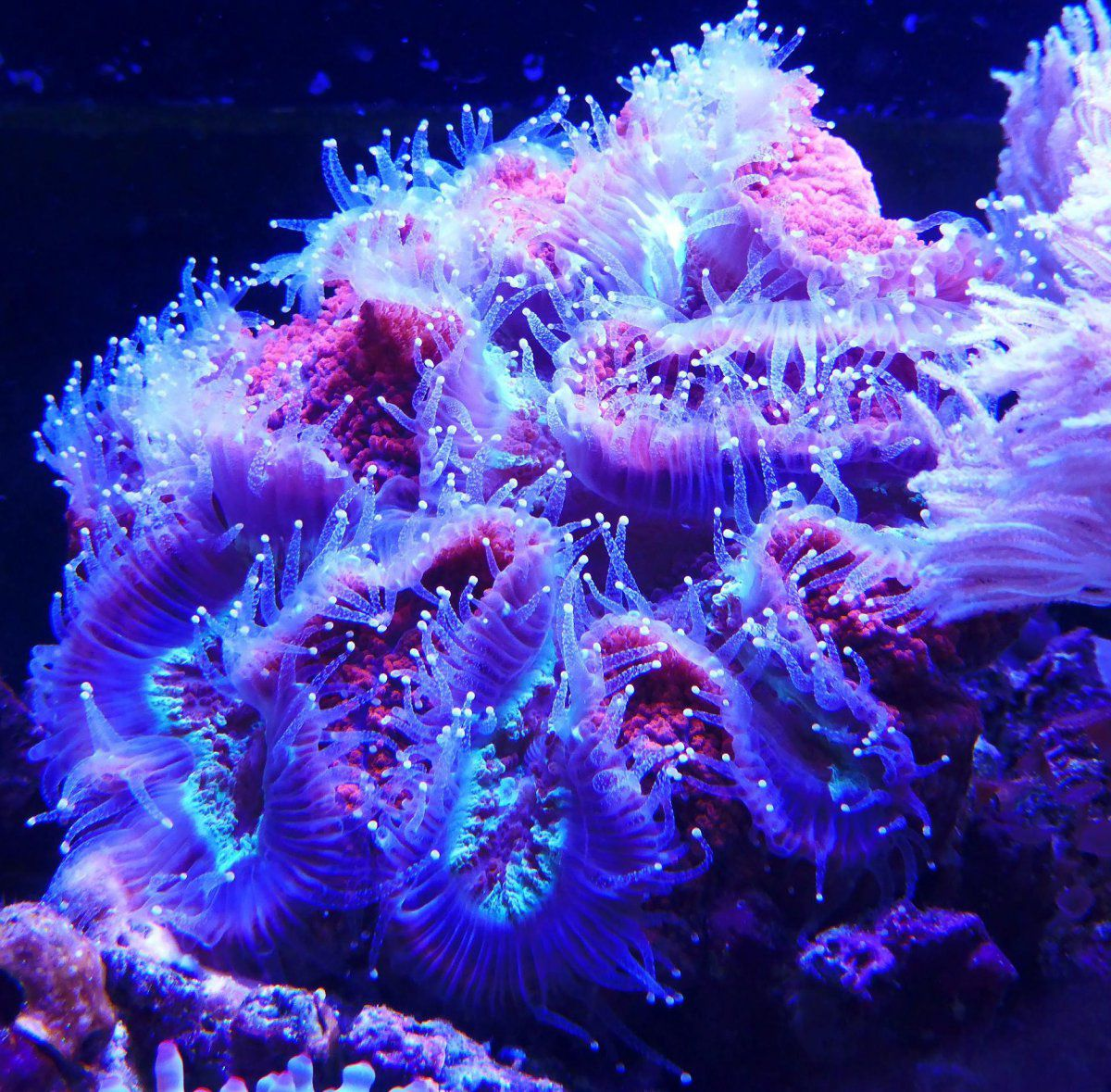 Corals 5.JPG