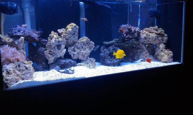 75 Gallon Bow Front Aquarium http://www.livingreefs.com/75-gallon-wall-aquarium-w-55-sump-first-tank-and-build-t40065p10.html