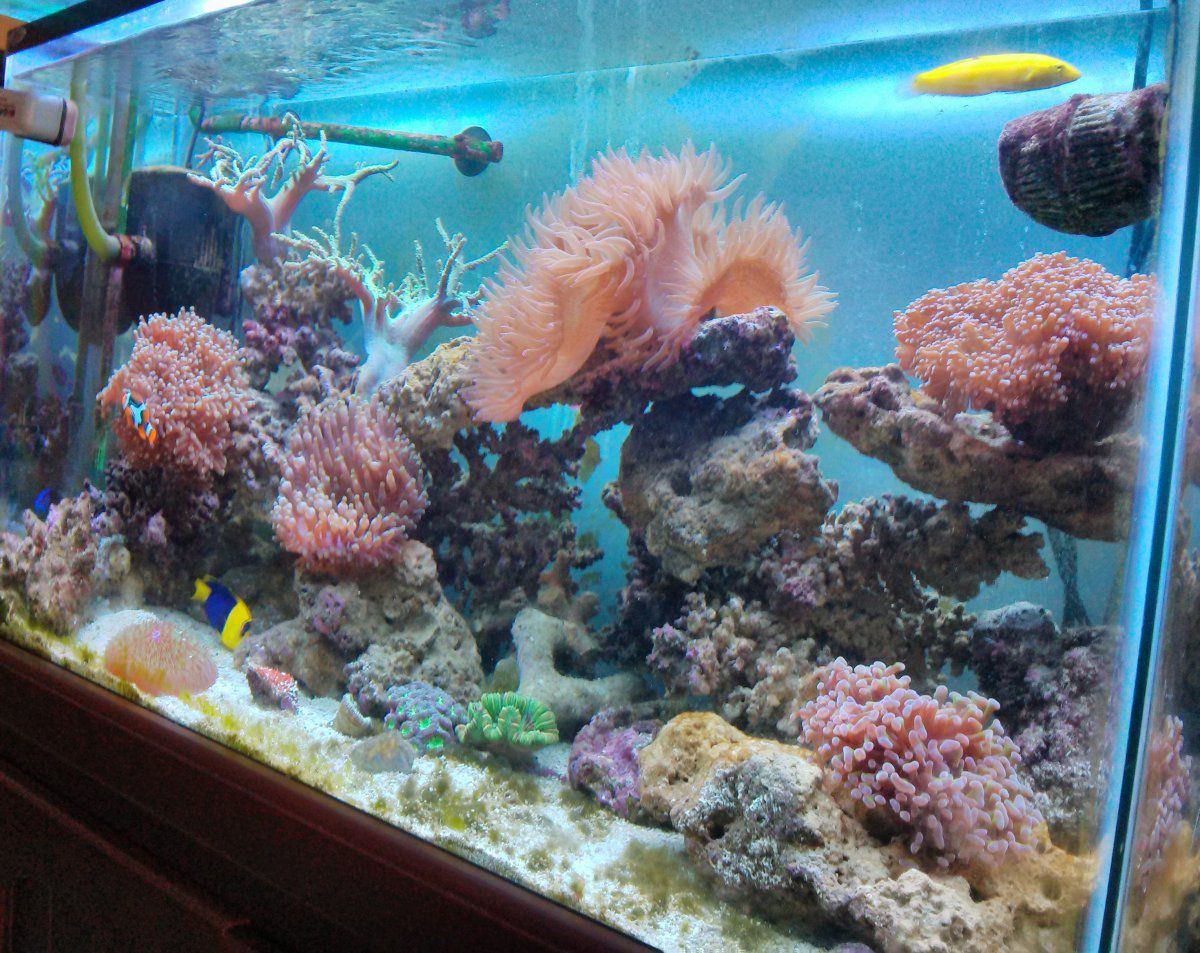 Chj 502 aquarium innenfilter 500 l h bis 150l aquarien for Aquarium innenfilter