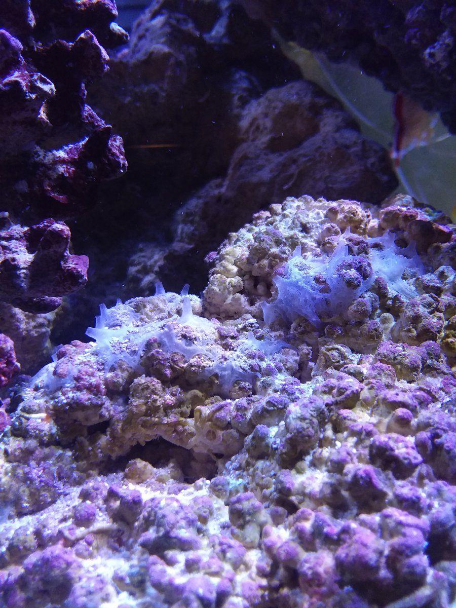 Reef Critter.jpg