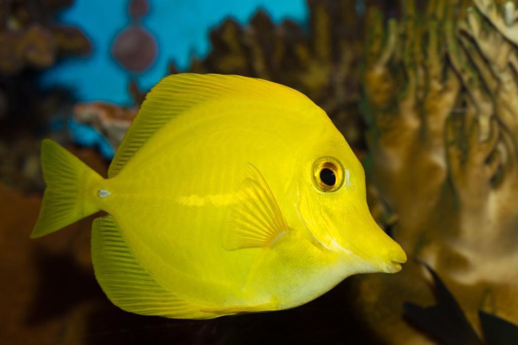Species8472.jpg