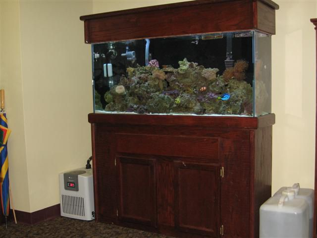 75 gallon aquarium stand and canopy 75 gallon hexagon for Small fish tank stand